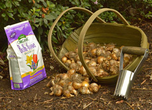 Planting Bulbs—Dig, Drop, Done!