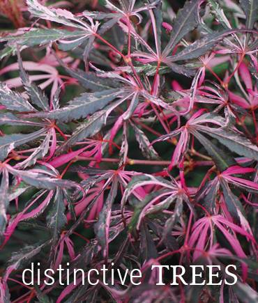 Shop Distinctive Trees