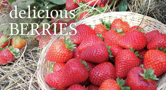 Delicious Berries
