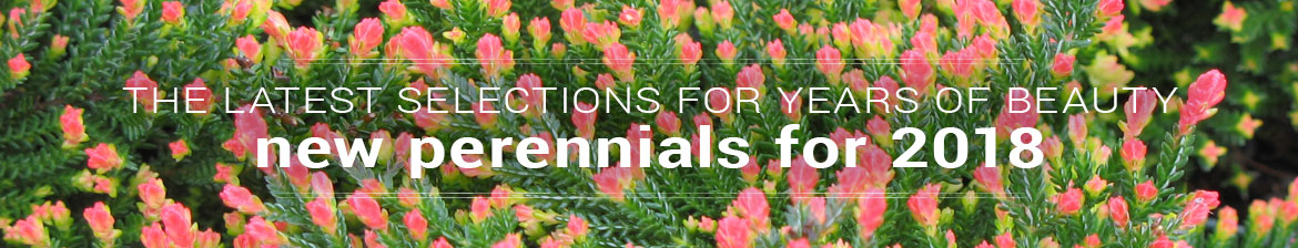 New Perennials for 2018