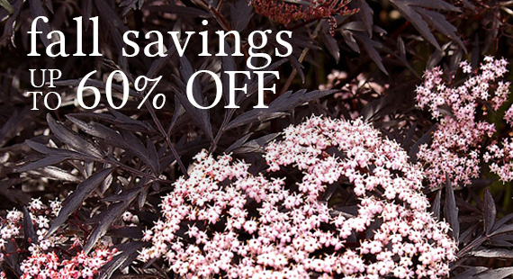 Fall Into Savings Up to 60% Off