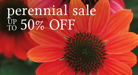 Wayside gardens americas premiere source of choice plants and this seasons biggest perennial sale up to 50 off mightylinksfo