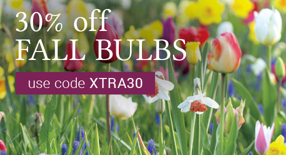 30% Off Fall Bulbs with code XTRA30