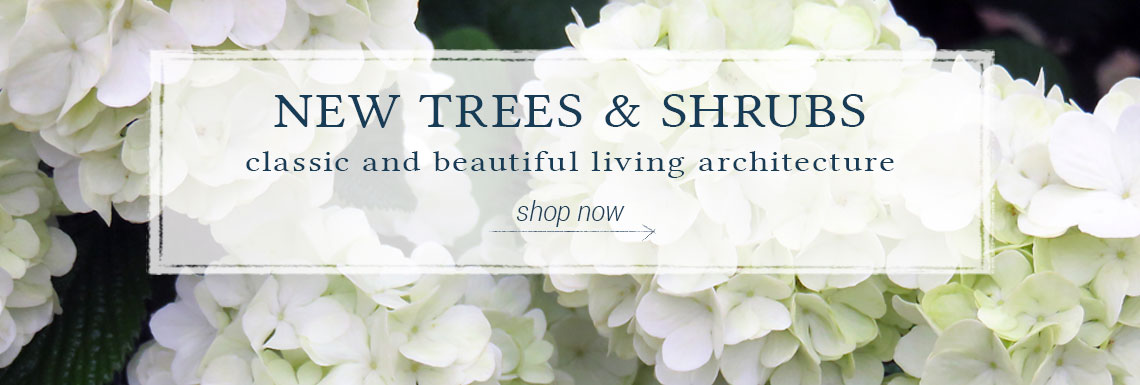 NEW TREES & SHRUBS