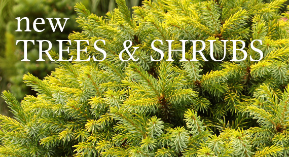 New Trees and Shrubs