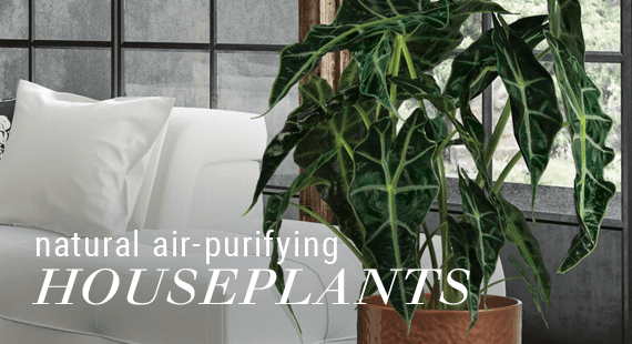Natural Air-Purifying Houseplants