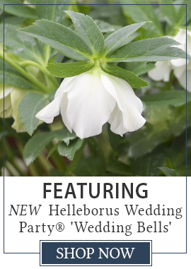 Featuring Helleborus Wedding Party Wedding Bells