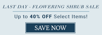 Flowering Shrub Sale