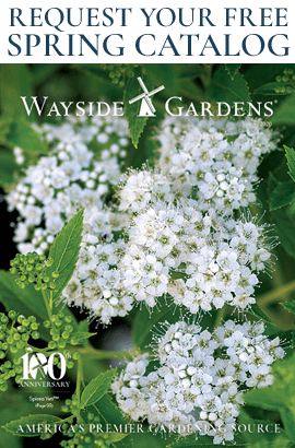 Request Your Free Wayside Gardens Catalog Now