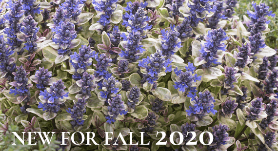New for Fall 2020