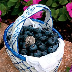 How Care For Blueberry Bushes