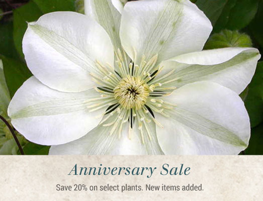 Anniversary Sale - Save 20% on Select Items