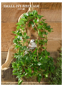 Small Ivy Birdcage