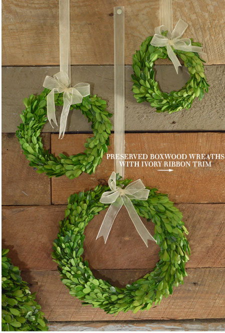 Preserved Boxwood Wreaths with Ivory Ribbon Trim