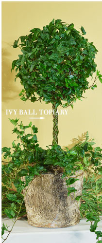 Ivy Ball Topiary