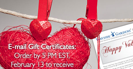 E-mail Gift Certificates: Order by 5 PM EST, February 13 to receive your gift certificate in time!