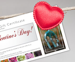 Paper Gift Certificates: Order by noon EST, February 7 to receive your gift certificate in time for your valentine!
