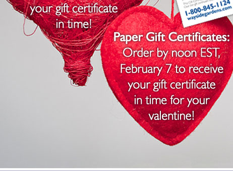Send a Gift Certificate Today