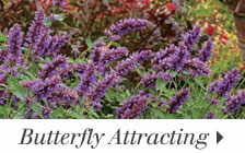 Butterfly Attracting