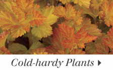 Cold-hardy Plants