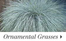 Grasses add texture to your flower beds