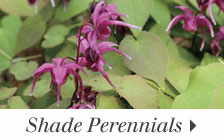 We have selections perfect for your shade garden
