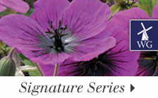 Our Wayside Signature Series has options chosen by horticultural experts