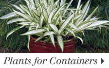 Plants for Containers
