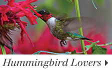 Hummingbird Lovers