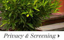 Privacy & Screening