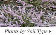 Plants by Soil Type