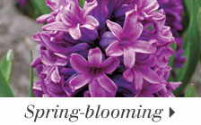 Spring-blooming Plants