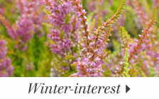 Winter-interest Plants