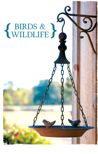 Birds & Wildlife button