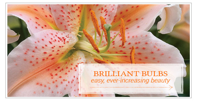 Brilliant Bulbs