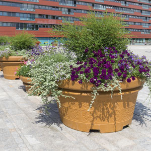 WG_Shrubs_Trees_Pots