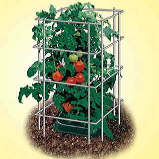 39 inch Parks Wire Tomato Pen - Pack of 3
