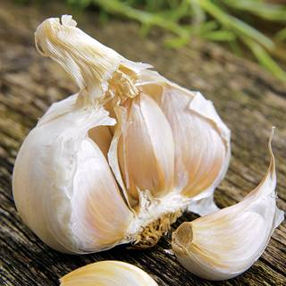 Garlic California Giant