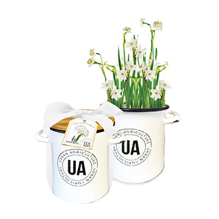 Paper Whites Grow Kit