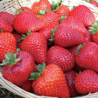 Sweet Kiss Strawberry
