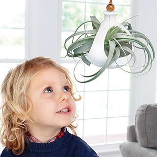 Tillandsia xerographica in a Hanging PotImage