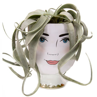 Air Plant with Lady Container