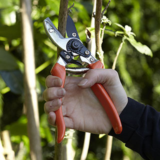 Anvil Secateurs