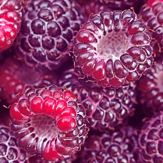 Raspberry Royalty