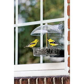 Droll Yankees® The Winner Multi-Purpose Window Feeder