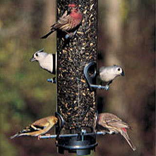 Droll Yankees® Classic Sunflower/Mixed Seed Feeder