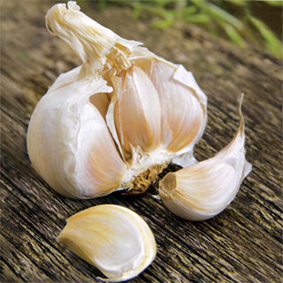 Garlic Kettle River Giant