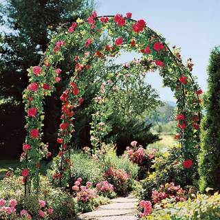 Garden Traditions Arbor