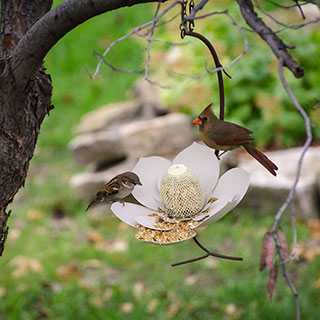 Magnolia Bird Feeder