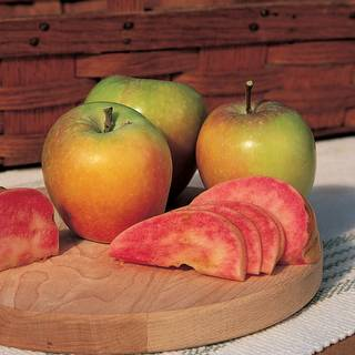 Red Flesh Mountain Rose™ Apple